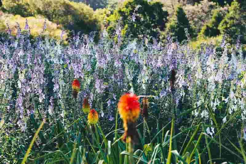 Jardin de Kirstenbosch