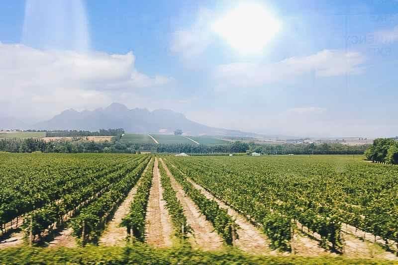 Vignes Afrique du Sud