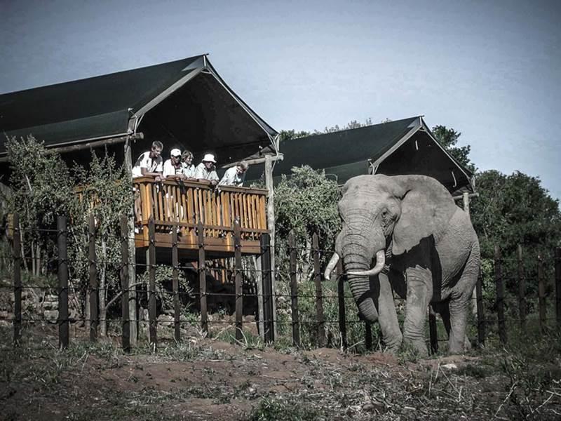 Arbre hôtel Kenya