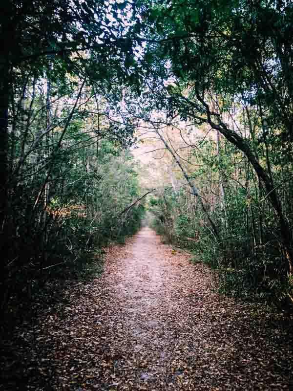Parc Ankaranafantsika