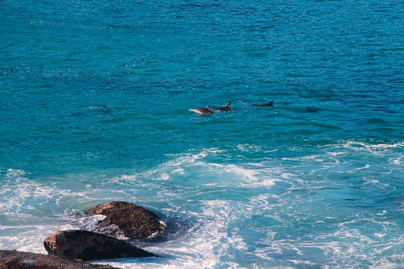 Dauphins Cape Town