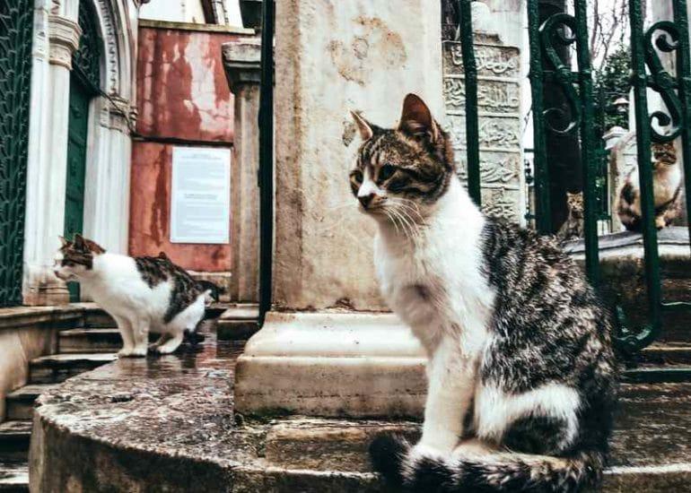 Chats à Istanbul