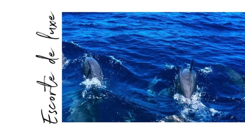 Dauphins Nosy Be