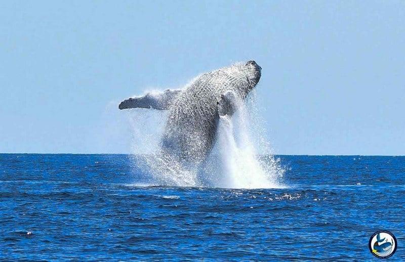 Baleines rand'eau