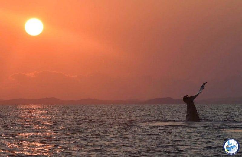 Baleine Madagscar