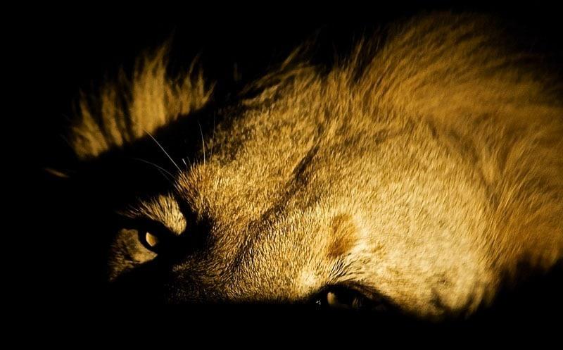 Safari de nuit