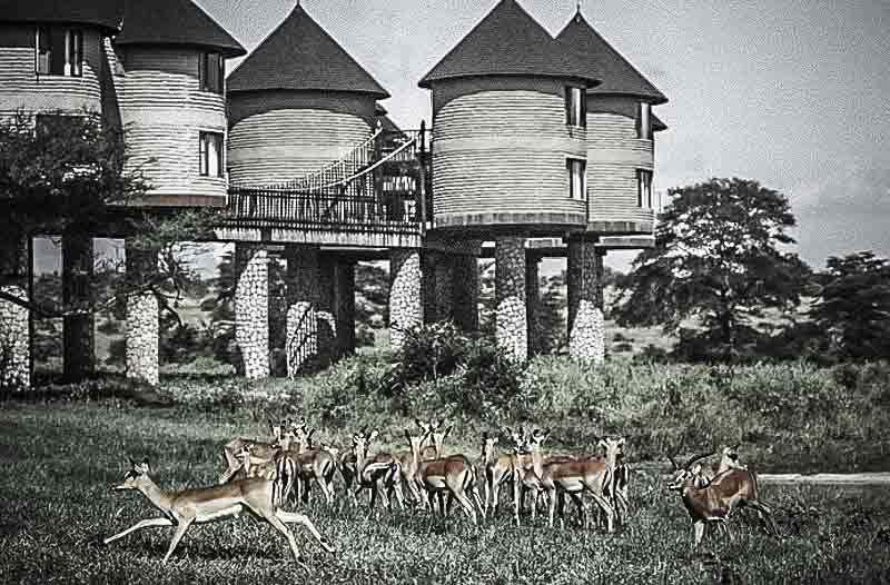 Safari arbre-hôtels