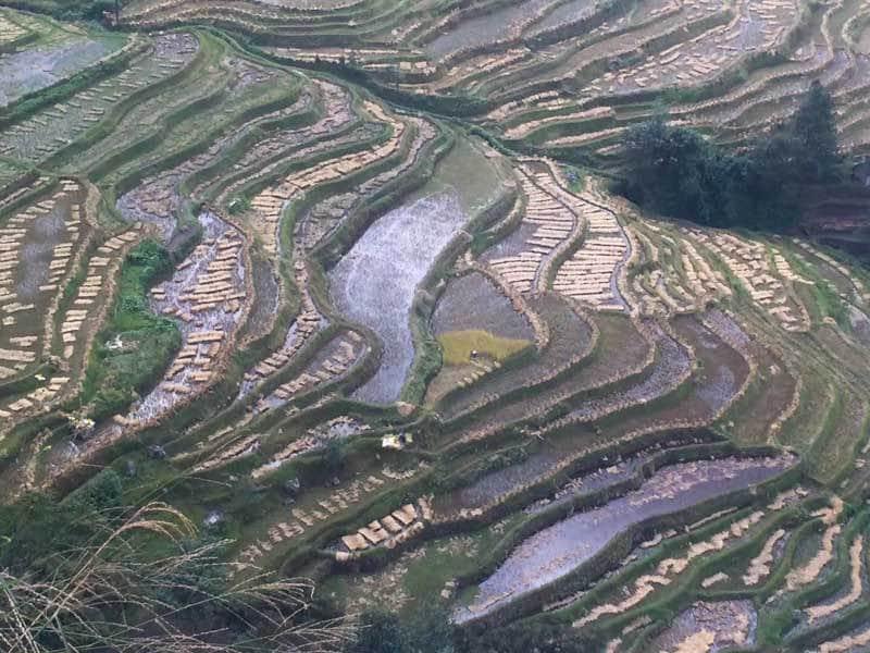 Rizières Yuangyan