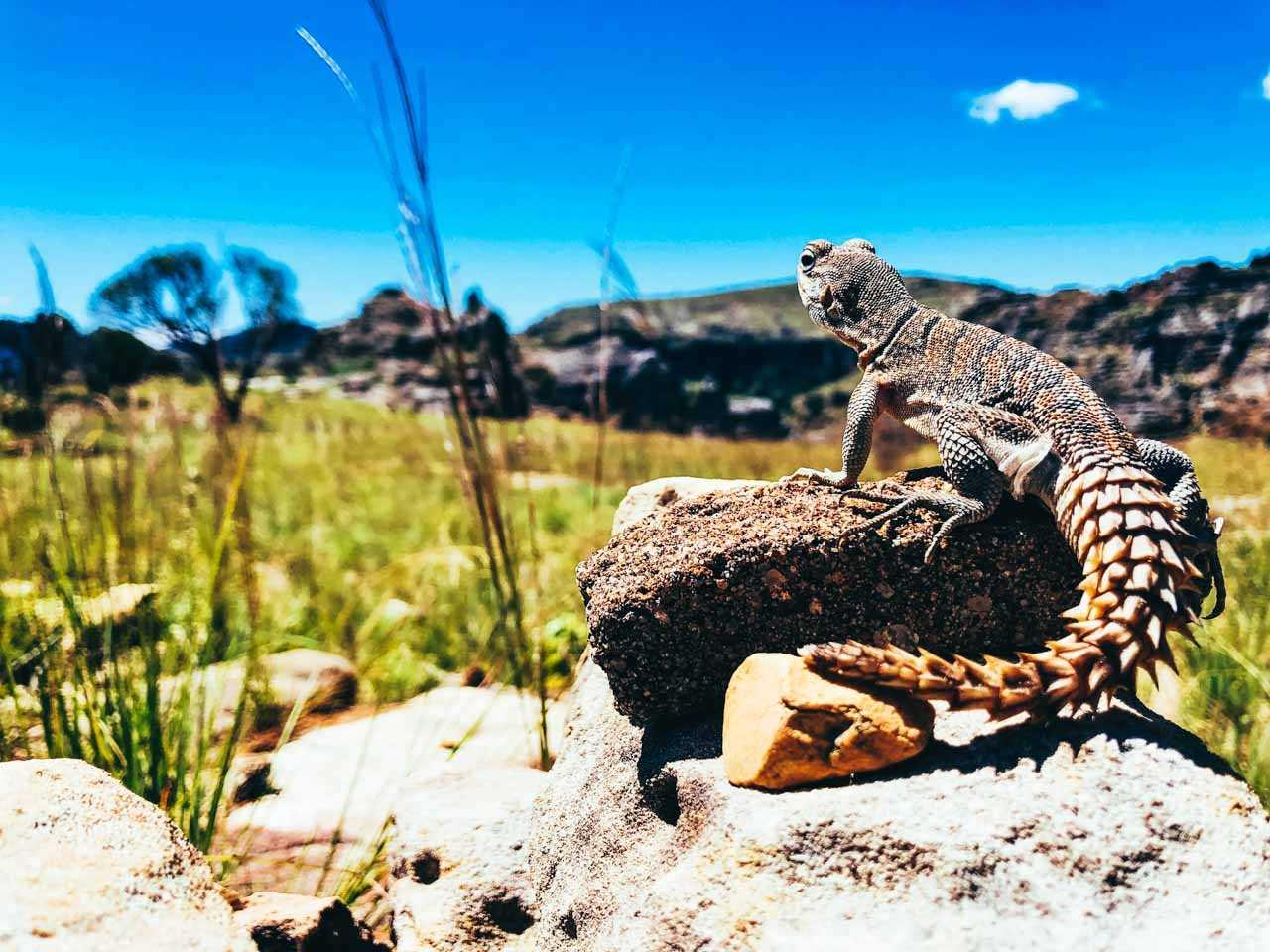 Parc de l'Isalo – Madagascar