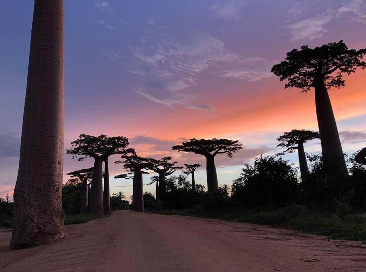 Morondava – Madagascar